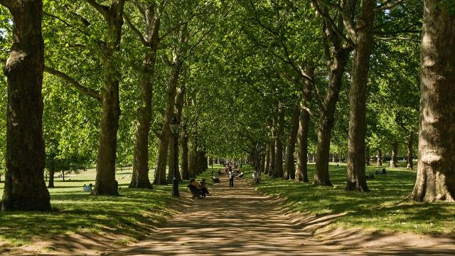 image from visit London.http://www.visitlondon.com/things-to-do/place/449608-green-park-a-royal-park